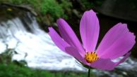 flower-and-stream.jpg